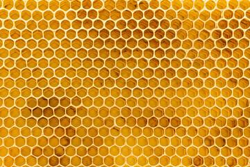 Beeswax honeycomb foundation close up