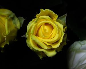 Beautiful flower, macro