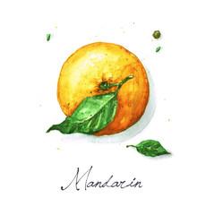 Watercolor Food Painting - Mandarin or Orange