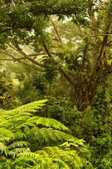 rainforest near Cairns, North Queensland, Australia