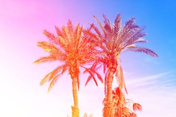 Palm trees wiht sunlight, close-up
