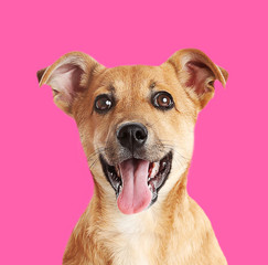 Little cute puppy on pink background
