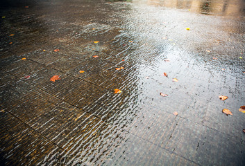 Water on asphalt with autumn leafs as background.