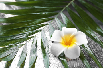 Beautiful composition of frangipani flower on palm leaves, close up