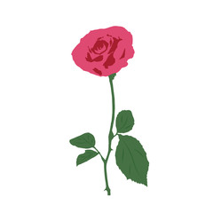 illustration of a rose on a white background