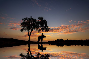 sun rise silhouette elephants refection