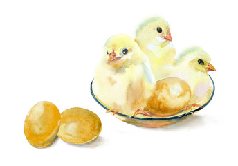 Watercolor painting. Three yellow chickens and eggs on a white background.