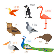 Vector set of Colorful bird icons. Owl, hummingbird, pigeon and