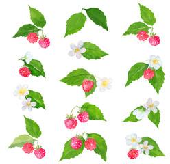 Watercolor raspberry clipart