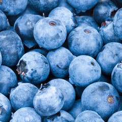 Bunch of fresh blueberries - close up studio shot