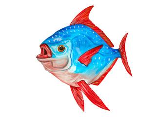 Watercolor tropical Lampris regius fish on white background. Han