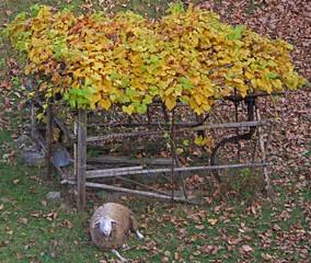 alone sheep in autumn landscape