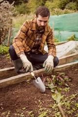 Portrait of man harvesting