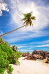 Palm tree and rocks on a tropical beach