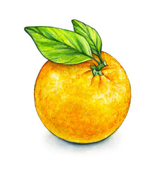 Orange fruit ripe with green leaves. Handwork. Tropical fruit. Healthy food. Watercolor