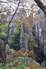 The stone forest landscape