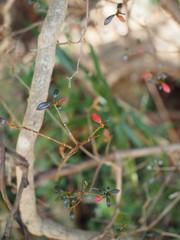 中根十五郎穴横穴墓群の冬の草木