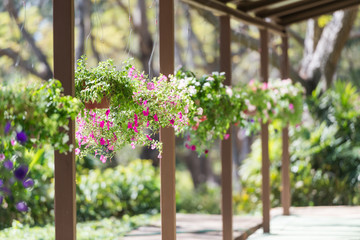 Pretty pink and purple flowers in hanging basket