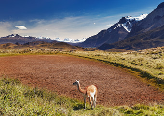 Wall Mural - Torres del Paine, Chile