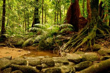 rainforest at Mossman Gorge, Daintree National Park, Queensland, Australia