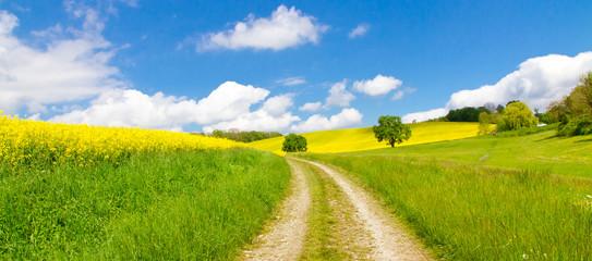 Weg im Frühling - Way in springtime
