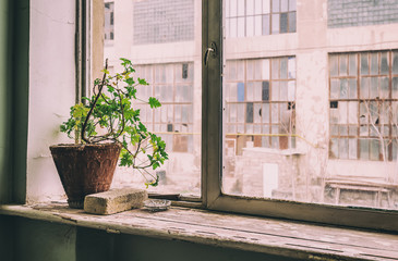 Single flower in a clay pot on the windowsill. A survivor in an abandoned building
