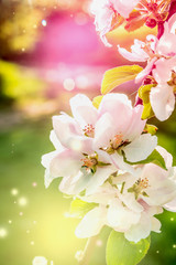 Colorful nature background with spring blossom, close up