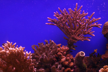 Underwater corals and Red Sea fish