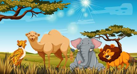Wild animals in the field at daytime
