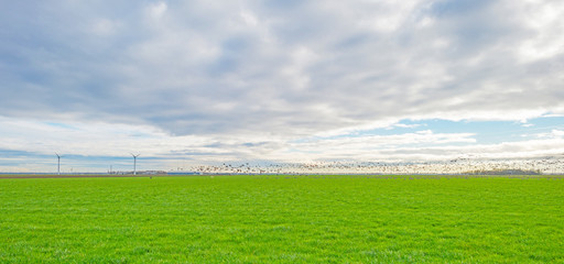 Geese flying over a meadow in winter