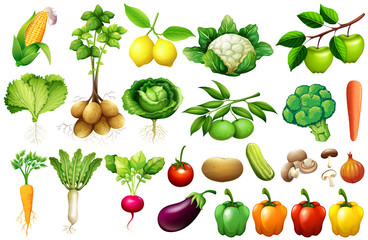 Various kind of vegetables