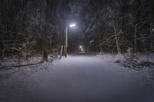 Snow in Forest at Night