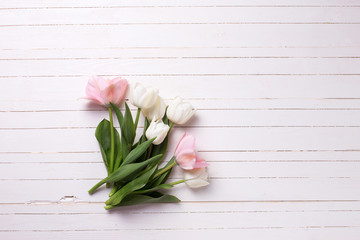 Fresh  spring white and pink  tulips  on white  painted wooden b