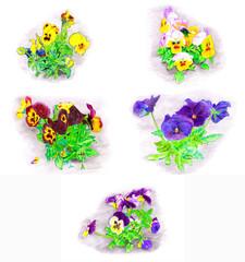 Set Hand color drawn flowers bouquet