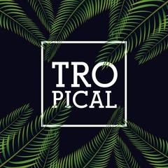 tropical frame design
