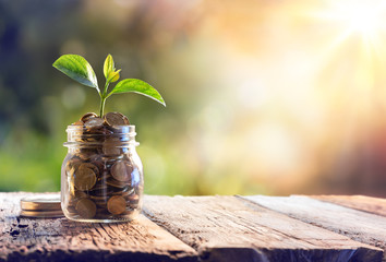 Obraz Plant Growing In Savings Coins - Investment And Interest Concept  - fototapety do salonu