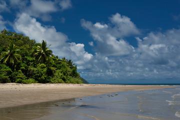 Rainforest near Cairns, Queensland, Australia