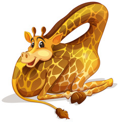 Cute giraffe folding its neck