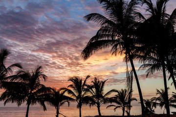 Palms on a beach in Kourou, French Guiana