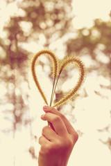 Human hand holding heart-shape grass flower. Love concept.