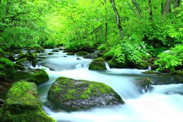 青森県十和田 夏の奥入瀬渓流