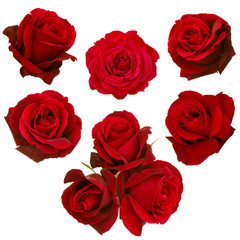 collage of red roses