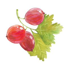 watercolor red gooseberry