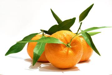 Mandarino agrume