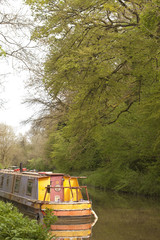 Avon Canal.  In Spring the trees still clearly show the lines of their branches through the regrowth of the foliage after winter.