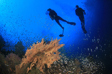 Scuba diving exploring coral reef in ocean