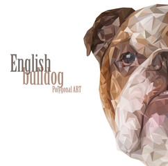 English bulldog. Polygonal drawing..