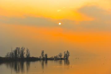 Alberi lontani nella nebbia arancione