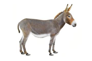 Foto op Plexiglas Ezel donkey