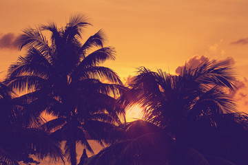 Fototapete - Sunset through palm tree silhouette